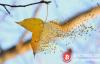 【蜗牛娱乐】2013年牛市VS 2019年熊市,哪些币消失了?