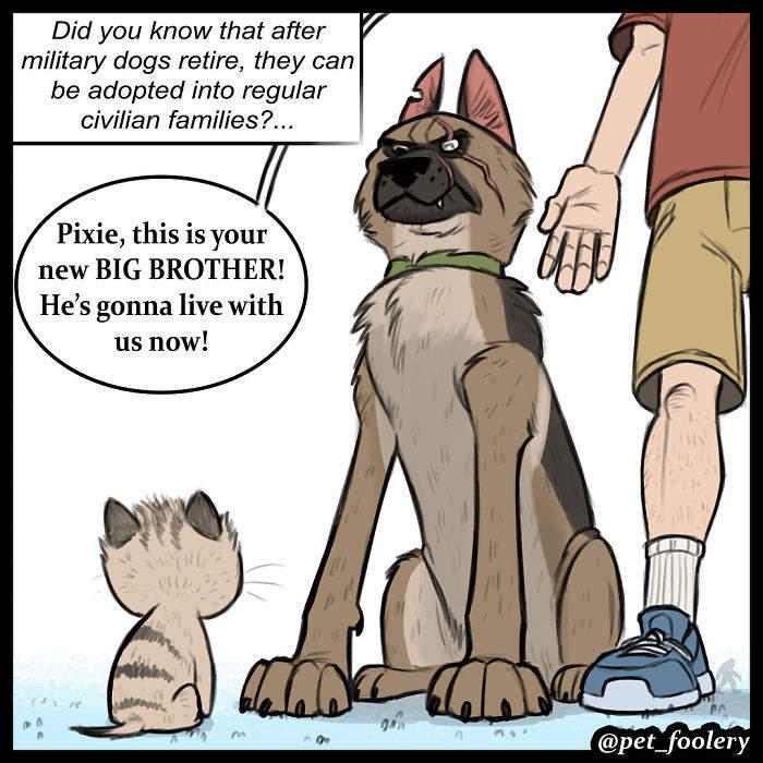 【蜗牛娱乐】最新动物漫画《小精灵与布鲁托》 退役德国牧羊犬与小猫暖心故事